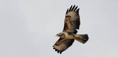 Buse variable © Jules Fouarge
