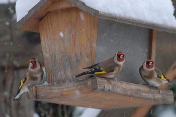 Restos de cours et de jardins for Oiseaux du sud de la france