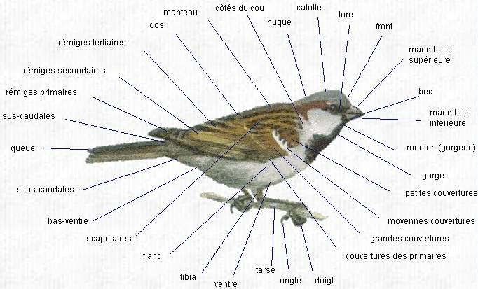 Topographie d'un oiseau