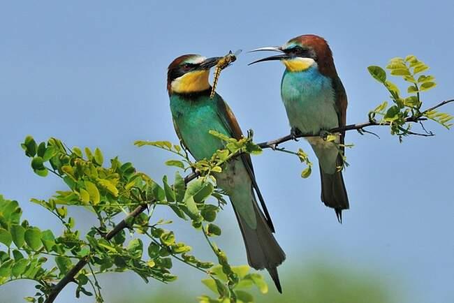 oiseaux-photo - Photo