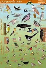 poster oiseaux des jardins
