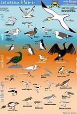 poster oiseaux de mer
