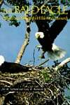 The Bald Eagle: Haunts and Habits of a Wilderness Monarch - Jon M. Gerrard, Gary R. Bortolotti