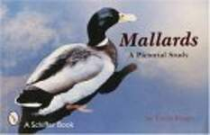 Mallards, a Pictorial Study