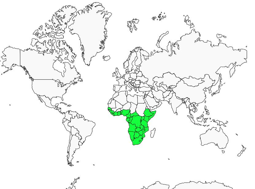 Carte de distribution de Amblyospize à front blanc