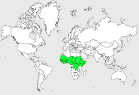 موسوعة شاملة عن طيور البوقير Bucorve.d.abyssinie