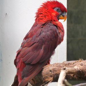 Lori cardinal
