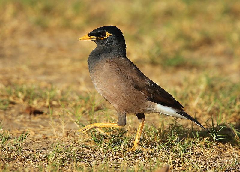 un oiseau Martin 21 Août trouvé par Martine Martin.triste.auau.2g
