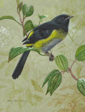 Phénoptile noir et jaune