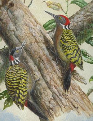 Pic d'Hispaniola