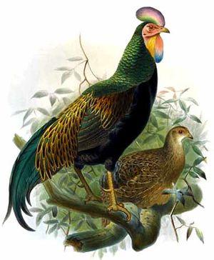 Coq de Java