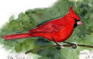 Cardinal Rouge Cardinalis Cardinalis