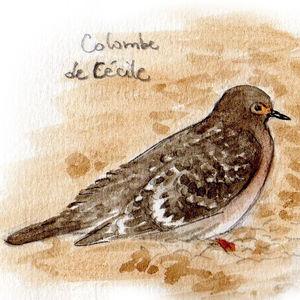 Colombe de Cécile