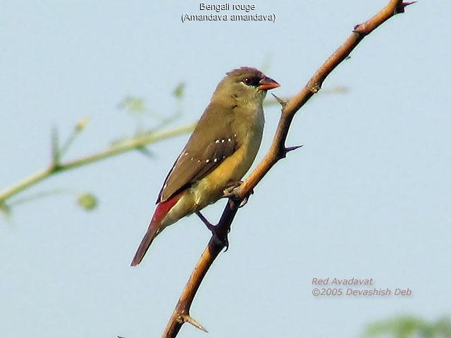 At dev english to bengali dictionary pdf free download