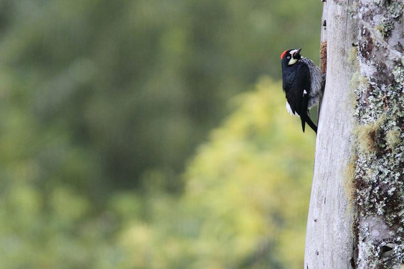 Wild bird identification by color  Online Bird Guide