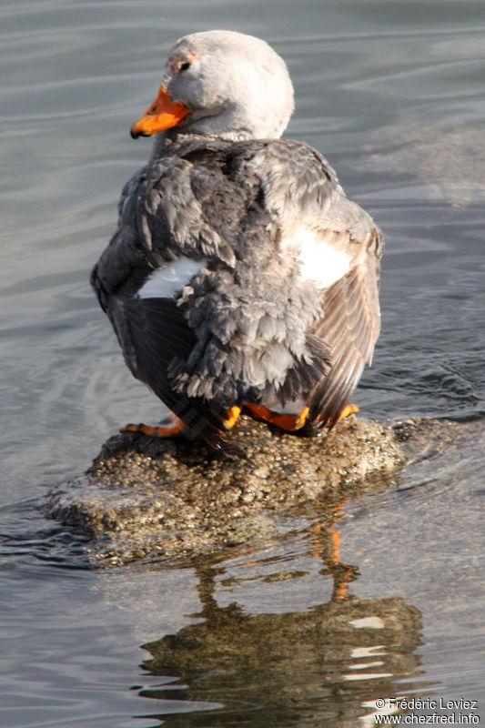 动物 鸟 鸟类 桌面