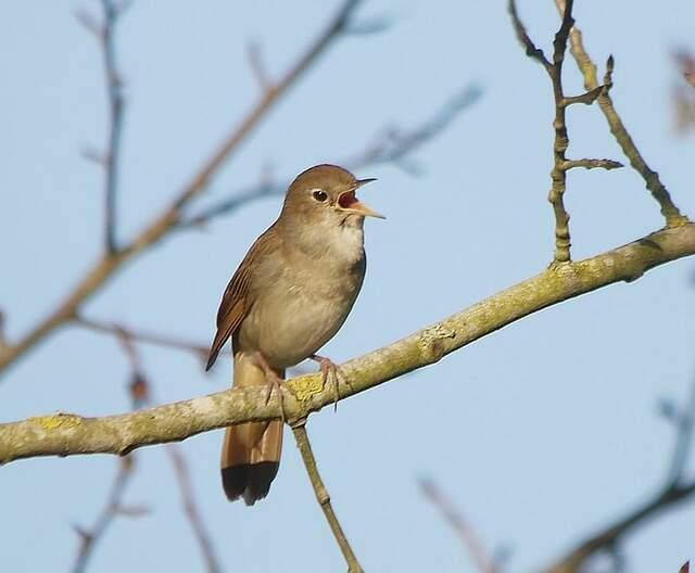florence nightingale engelsk wiki