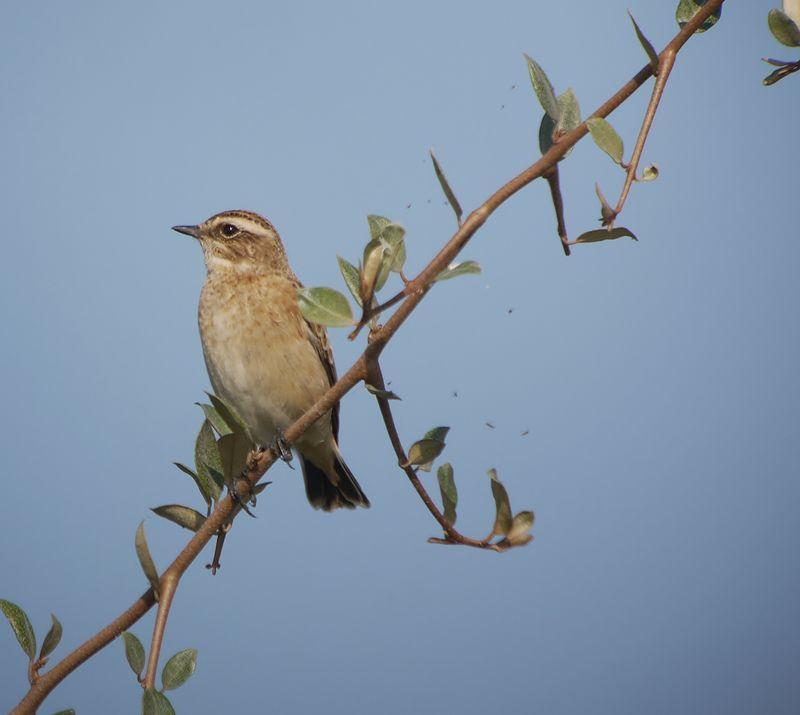 Photos des oiseaux de france page 436 for Oiseaux de france