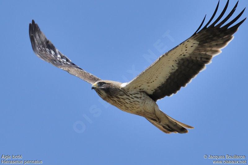 La fauconnerie Aigle.botte.jabo.3g
