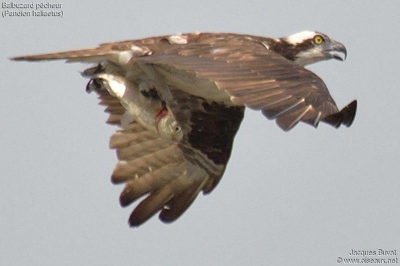 Le vol libre - Parole de plume
