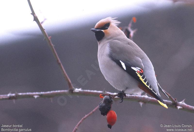 Venu du froid for Oiseaux du sud de la france