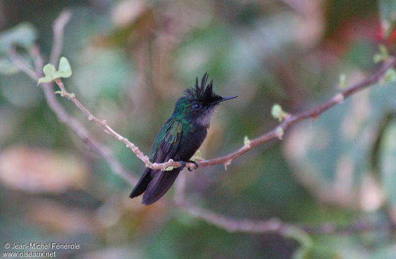 oiseaux net photos