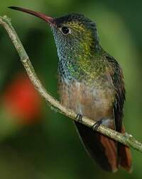 Ariane du Yucatan