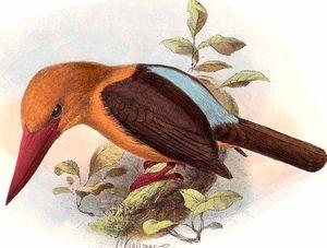 Martin-chasseur à ailes brunes