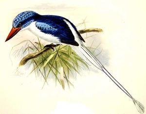 Martin-chasseur de Biak