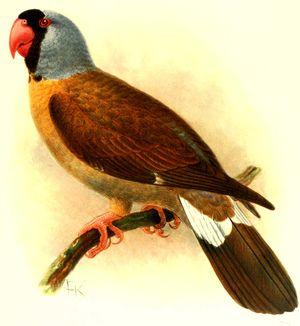 Mascarin de la Réunion