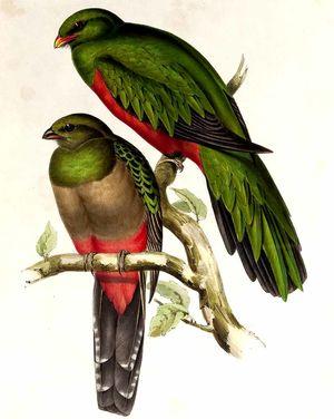 Quetzal pavonin