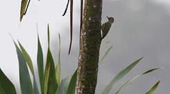 Pic du Gabon