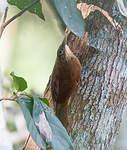 Grimpar talapiot