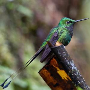 Haut-de-chausses du Pérou