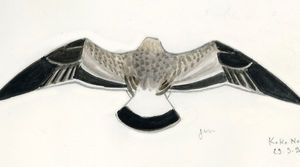 Goéland ichthyaète