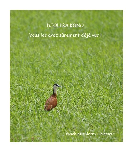 Rencontre ornithologique bretonne